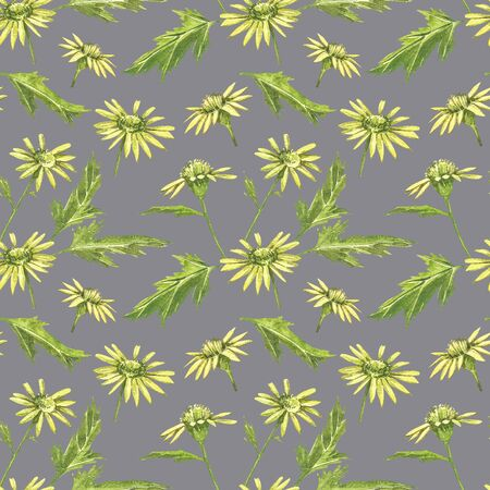 Chamomile or Daisy bouquets, yellow flowers. Realistic botanical sketch on white background for design, hand draw illustration in botanical style. Seamless patterns Stock Photo