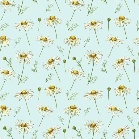 Chamomile or Daisy bouquets, white flowers. Realistic botanical sketch on white background for design, hand draw illustration in botanical style. Seamless patterns. Stock Illustration - 133612306