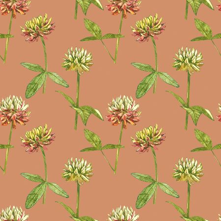 Watercolor botanical drawing of the meadow pink clover. Trefoil illustration isolated on the white background. Blossom, herbarium plant. Accurate botanical illustration. Seamless patterns. Standard-Bild - 133612461