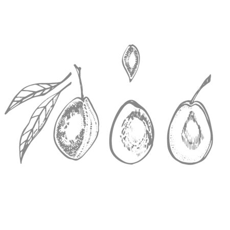Plums hand drawn illustration. Ink sketch. Hand drawn illustration. Seamless pattern. Healthy organic food. Farm market products. Best for package design. Banque d'images - 133612790