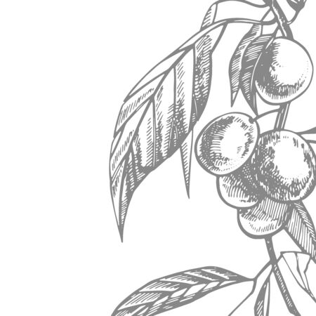 Plums hand drawn illustration. Ink sketch. Hand drawn illustration. Seamless pattern. Healthy organic food. Farm market products. Best for package design. Banque d'images - 133612795
