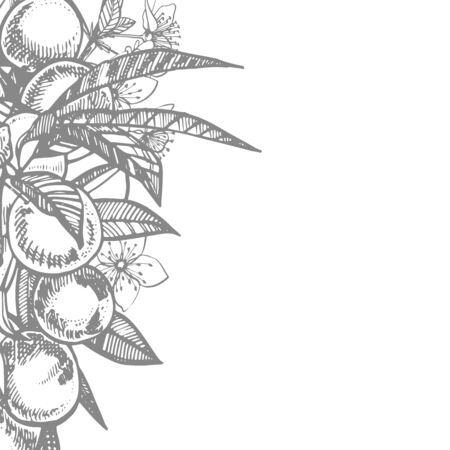 Plums hand drawn illustration. Ink sketch. Hand drawn illustration. Seamless pattern. Healthy organic food. Farm market products. Best for package design. Banque d'images - 133612798