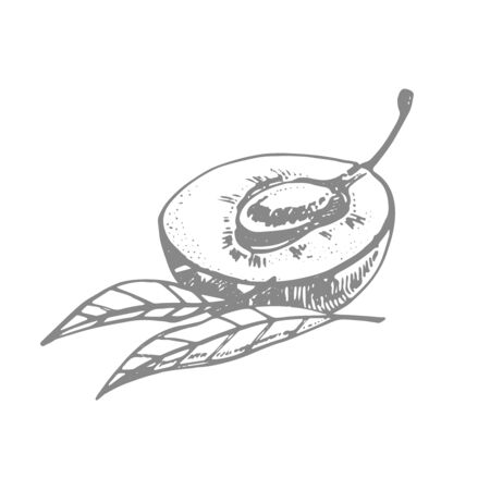 Plums hand drawn illustration. Ink sketch. Hand drawn illustration. Seamless pattern. Healthy organic food. Farm market products. Best for package design. Banque d'images - 133613023