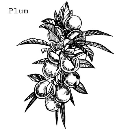 Plums hand drawn illustration. Ink sketch. Hand drawn illustration. Seamless pattern. Healthy organic food. Farm market products. Best for package design. Banque d'images - 133613035