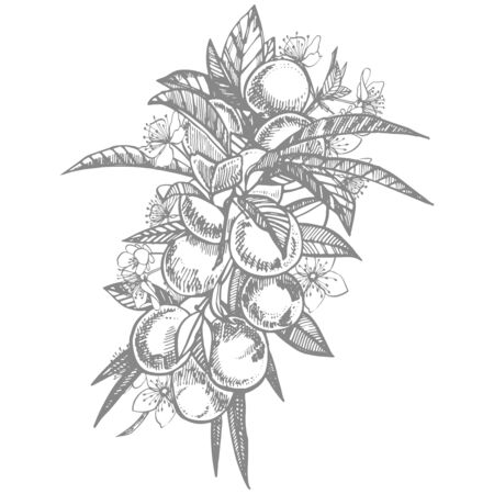 Plums hand drawn illustration. Ink sketch. Hand drawn illustration. Seamless pattern. Healthy organic food. Farm market products. Best for package design. Banque d'images - 133613092
