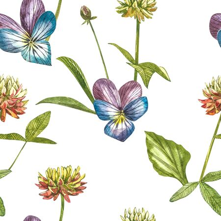 Pansy or daisy flower.Watercolor botanical illustration. Good for cosmetics, medicine, treating, aromatherapy, nursing, package design, field bouquet. Seamless patterns.