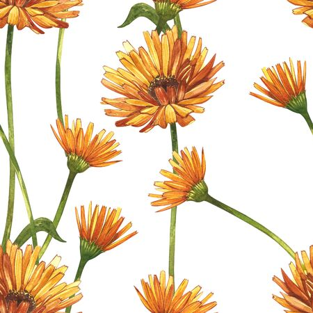 Calendula or daisy flower.Watercolor botanical illustration. Good for cosmetics, medicine, treating, aromatherapy, nursing, package design, field bouquet. Seamless patterns.