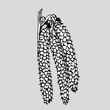 Realistic illustration of hazelnuts. Set of graphic hazelnuts elements, hand painted isolated on a white background. Standard-Bild - 134859120