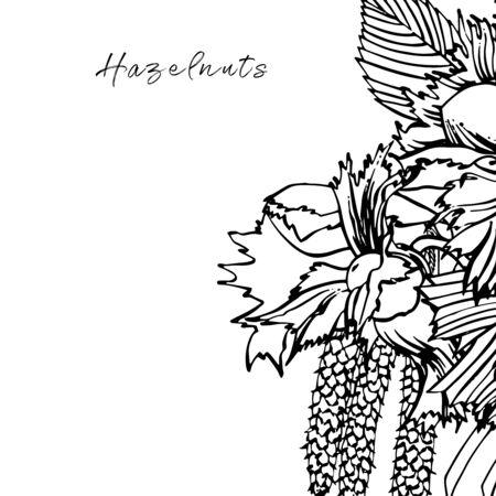 Realistic illustration of hazelnuts. Set of graphic hazelnuts elements, hand painted isolated on a white background. Standard-Bild - 134859126