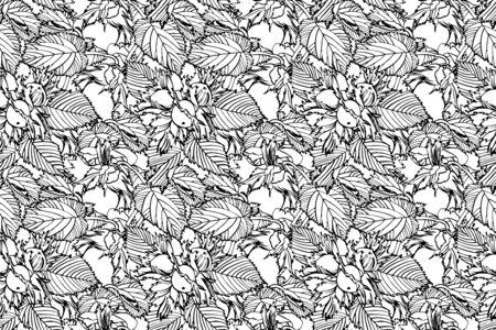 Realistic illustration of hazelnuts. Set of graphic hazelnuts elements, hand painted isolated on a white background. Standard-Bild - 134859132