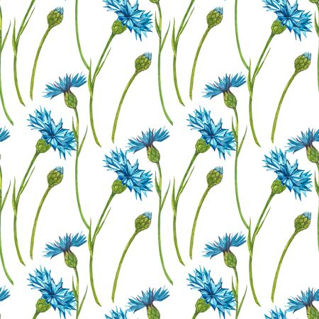Blue Cornflower Herb or bachelor button flower bouquet isolated on white background. Set of drawing cornflowers, floral elements, watercolor botanical illustration. Seamless patterns. Stock Photo