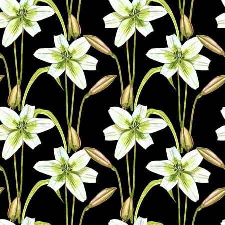 Watercolor white lilies. Seamless patterns. Wild flower set isolated on white. Botanical watercolor illustration, white lilies bouquet, rustic lilies flowers.