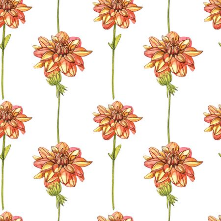 Watercolor orange dahlias. Seamless patterns. Wild flower set isolated on white. Botanical watercolor illustration, orange dahlias bouquet, rustic dahlias flowers.