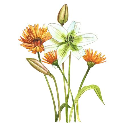 Watercolor white lilies. Wild flower set isolated on white. Botanical watercolor illustration, white lilies bouquet, rustic lilies flowers Banque d'images - 137260214