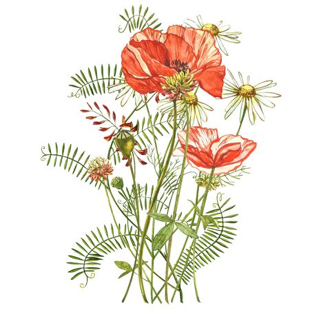 Watercolor red poppies. Wild flower set isolated on white. Botanical watercolor illustration, red poppies bouquet, rustic poppy flowers Banque d'images - 137260176