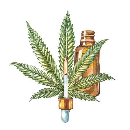 CBD oil hemp products. Watercolor illustration on white background Zdjęcie Seryjne