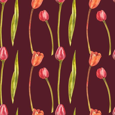 Watercolor Tulips. Wild flower set isolated on white. Botanical watercolor illustration, orange tulips bouquet, rustic flowers