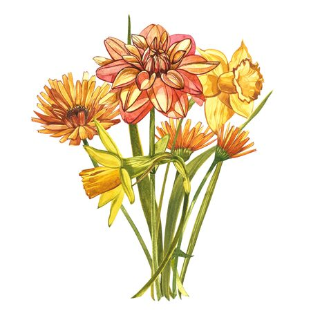 Watercolor Narcissus and Dahlias. Wild flower set isolated on white. Botanical watercolor illustration, yellow narcissus bouquet, rustic flowers. Watercolor illustration on white background. Set of drawing floral elements, watercolor botanical illustration
