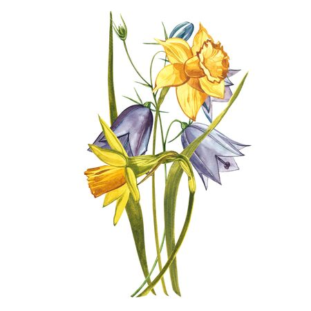 Watercolor Narcissus. Wild flower set isolated on white. Botanical watercolor illustration, yellow narcissus bouquet, rustic flowers. Watercolor illustration on white background. Set of drawing floral elements, watercolor botanical illustration.