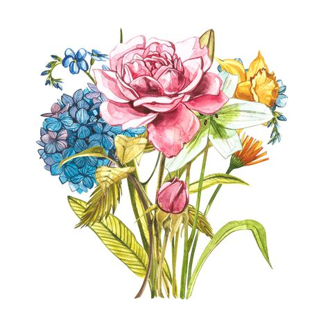 Watercolor bouquet with pink wild roses, hidrungea and Narcissus . Wild flower set isolated on white. Botanical watercolor illustration, roses bouquet, rustic flowers. Isolated on white background Zdjęcie Seryjne