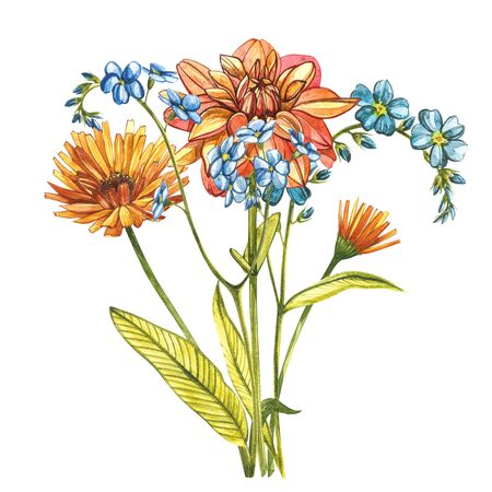 Watercolor bouquet Forget-me-not flowers, Dahlias and Calendula. Wild flower set isolated on white. Botanical watercolor illustration, rustic flowers. Good for cosmetics, medicine, treating, aromatherapy, nursing, package design, field bouquet. Hand drawn wild hay flowers