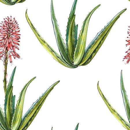 Aloe Vera plant on white Background. Watercolor agave, aloe vera,succulent, green plant. Botanical watercolor illustration of Aloe Vera. Seamless patterns. 스톡 콘텐츠