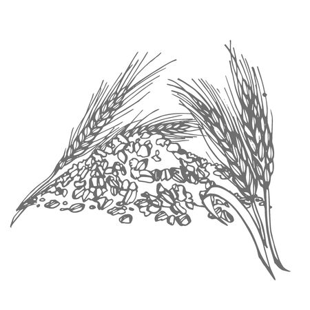 Oats, oat flakes. Graphic illustrations. Agriculture industry organic crop products for oat groats flakes, oatmeal packaging design