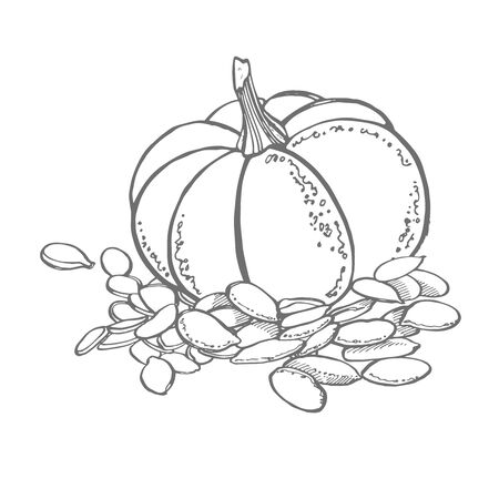 Pumpkins seeds vector superfood drawing. Isolated hand drawn illustration on white background. Organic healthy food. Great for banner, poster, label, sign