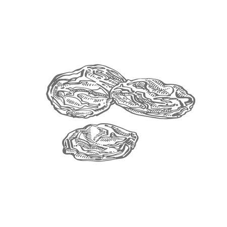 Raisins. Vector illustrations of Sketch Dried Fruits.