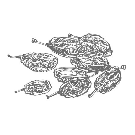 Raisins. Vector illustrations of Sketch Dried Fruits.