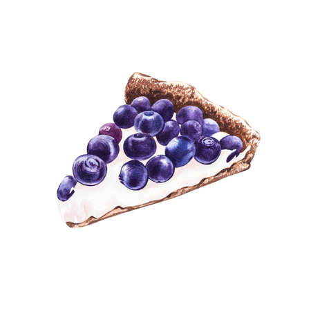 Watercolor Blueberry pie. Botanical illustration. Hand drawn watercolor painting blueberry on white background.
