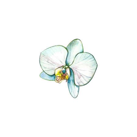 Orchid Watercolor illustration. Botanical illustration. Spa concept