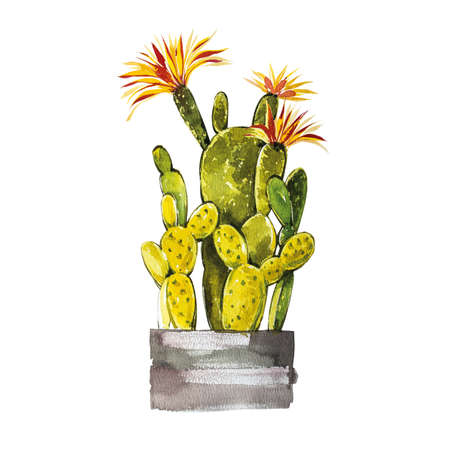 Watercolor cactus isolated on white background. Its perfect for cards, posters, banners, invitations, greeting cards, prints. Standard-Bild