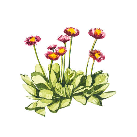 Watercolor small pink flowers. Hand draw watercolor illustrations on white background. Easter collection.