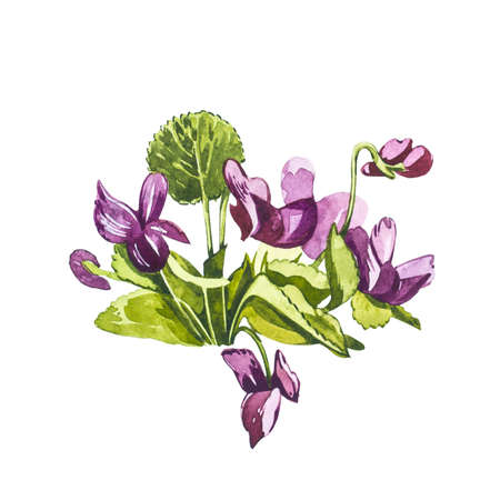 Watercolor violet flowers. Hand draw watercolor illustrations on white background. Easter collection.