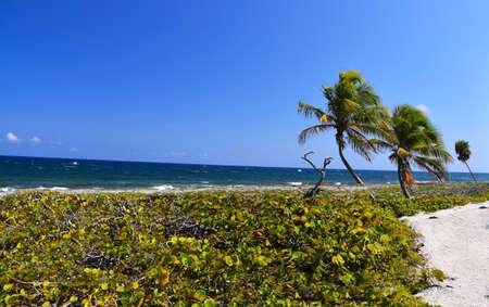 Blue sea with palm tree Stock fotó - 103821215