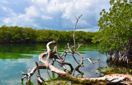 Beautiful river Stok Fotoğraf