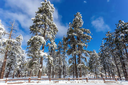 bryce canyon: Forest at Bryce Canyon Stock Photo