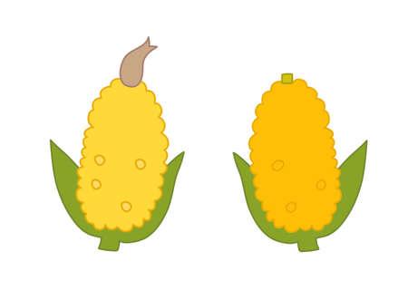 Simple illustration of corn with beard