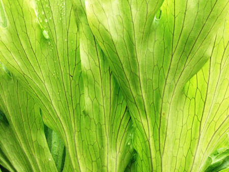 bright: Bright Green Leaf Background Full Frame