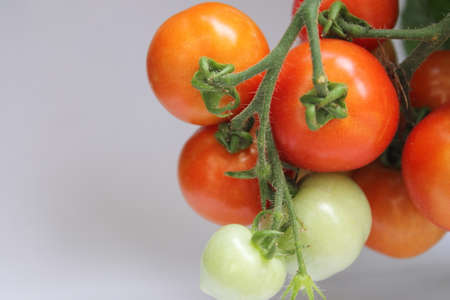 ripening: Bunch of cherry tomatoes growing on the vine Stock Photo