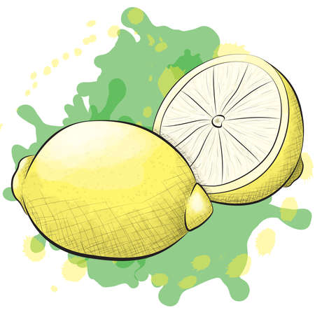 cross hatching: A vector illustration of one and a half lemons in an ink and watercolor style on a splattered background. Illustration