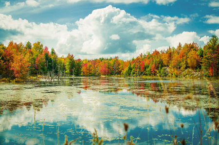 adirondack: Landscape View of Fall Foliage on Pond with Cloud Reflection in the Adirondack Park in New York