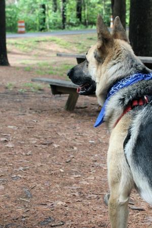 Attentive dog Imagens - 79797523
