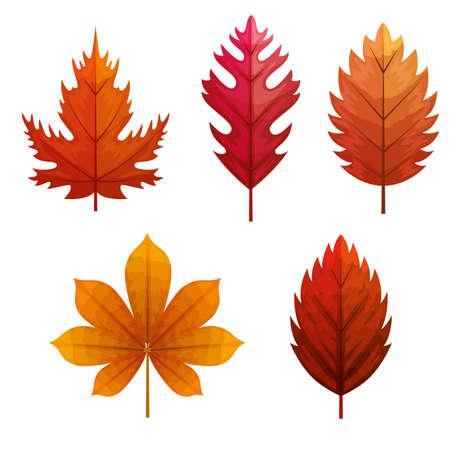 set of autumn leafs naturals vector illustration design Ilustracja