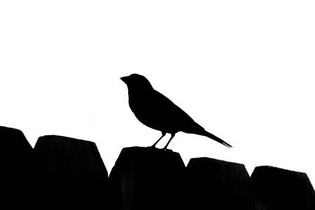 songbird: Songbird Silhouette