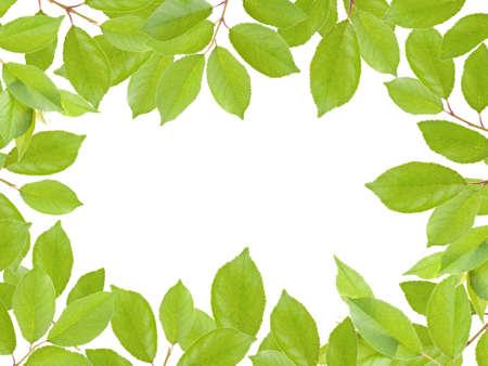green leaves frame on white background photo