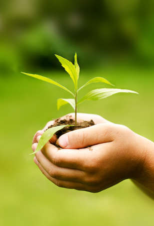 Children`s hands holding young plant against spring green background. Ecology concept  Standard-Bild