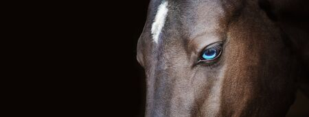 Akhal-Teke paard met blauwe ogen portret