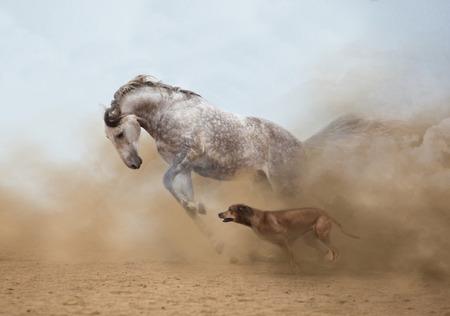 Lusitanian horse is playing with the Rhodesian Ridgeback dog Foto de archivo